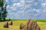В Алматинской области активно ведется работа по сенокошению
