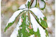 В каких регионах Казахстана выпадет снег — прогноз погоды на 28 октября