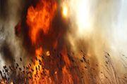 Близ войсковой части в Туркестанской области произошел пожар