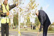 5 тысяч деревьев высадили в Талдыкоргане