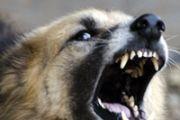 В Дагестане собаки насмерть загрызли четырёхлетнего мальчика