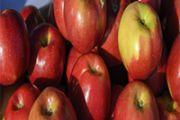 В Алматинской области площади интенсивных яблоневых садов превысили 2 тысячи гектаров