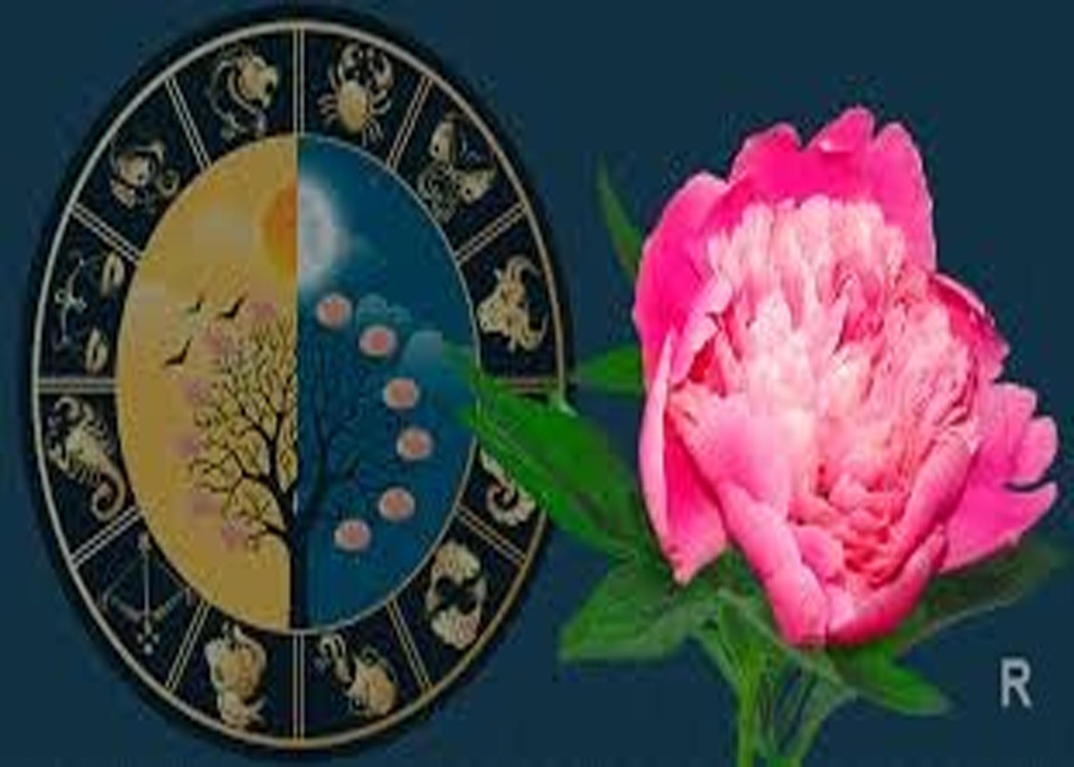 Цветы комнатные для знака зодиака лев